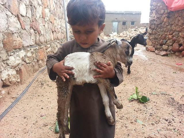 Niño con cachorro de cabra tras el último ciclón en Socotra