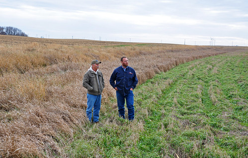 Filter strips, like the one NRCS District Conservationist Tony Moore (left) and Ventura farmer Adam Boge are standing in, helped Boge become eligible for the Conservation Stewardship Program (CSP).