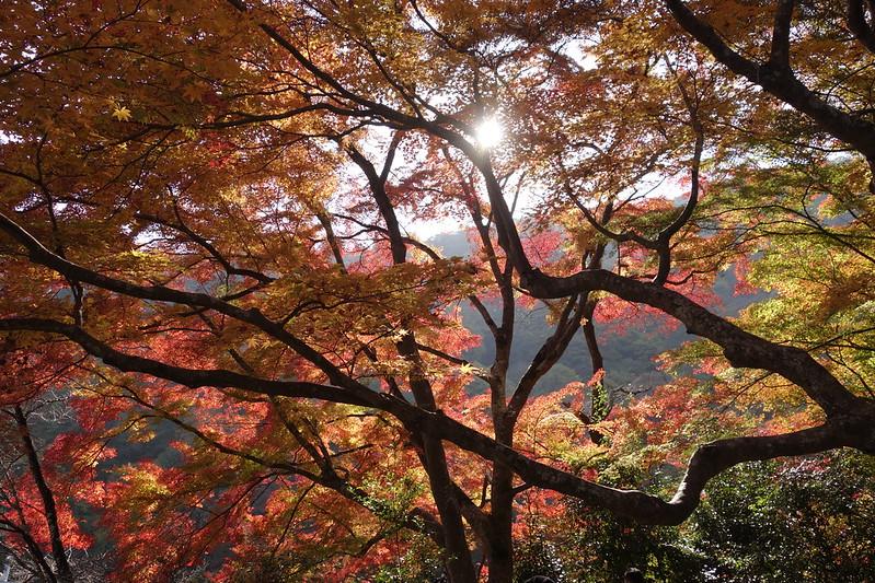 京都・嵐山・紅葉