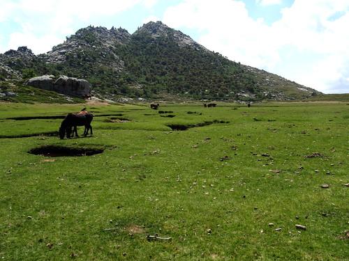 Le Pianu d'Urnucciu et ses chevaux devant le Castellu