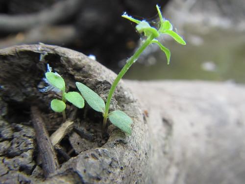 Tiny planter.
