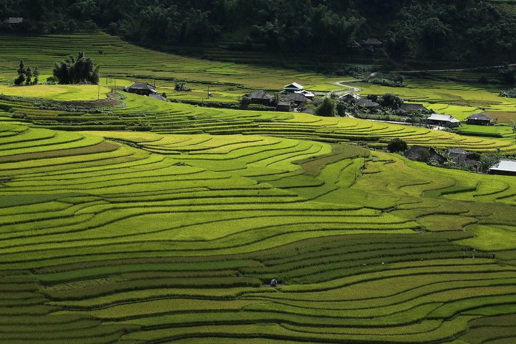 Thung lũng Khau Phạ, chụp từ nhà A Hờ