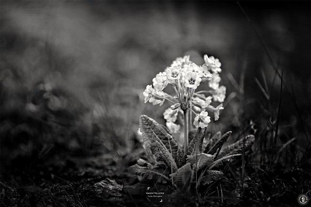 flowers bokeh dark photography
