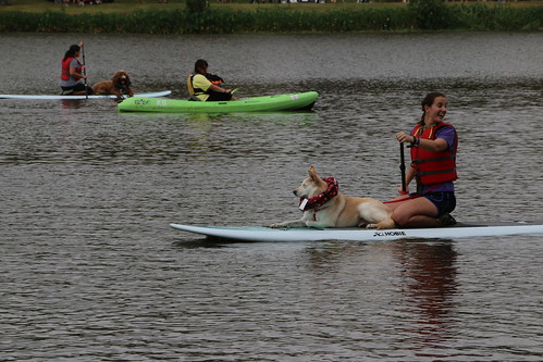 Dogs on paddlecraft.
