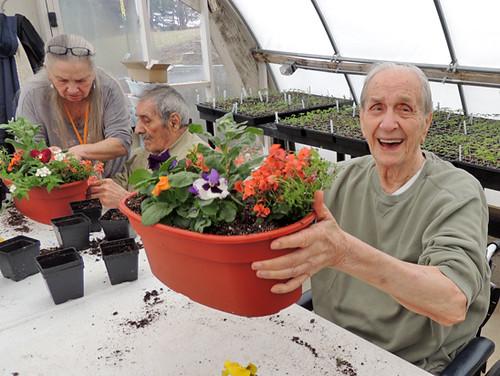 image: veteran gardener happy about his plant
