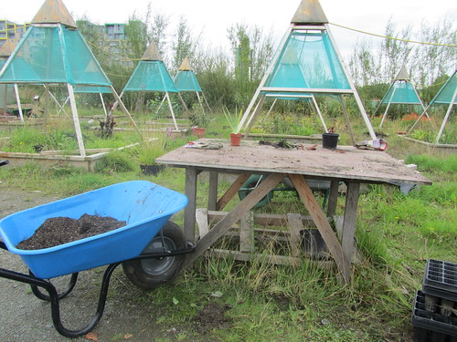 rough wooden table with a couple of small plants and a blue wheelbarrow