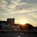P009-sunset bird