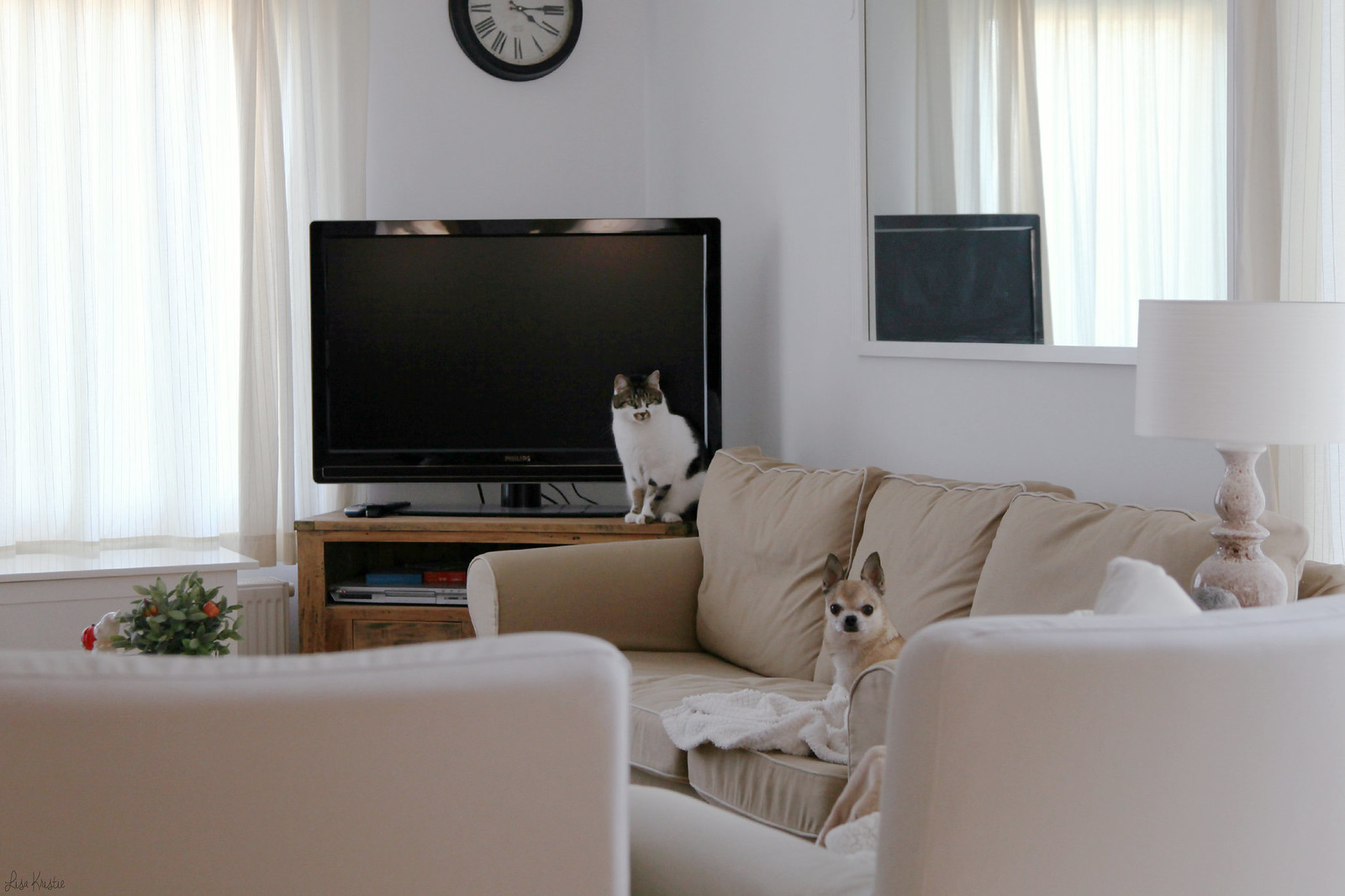 cat chihuahua dog home interior beige white living room sofa couch tv european scandinavian style pets