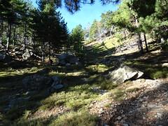 Montée sur le sentier de la forêt de Timozzu
