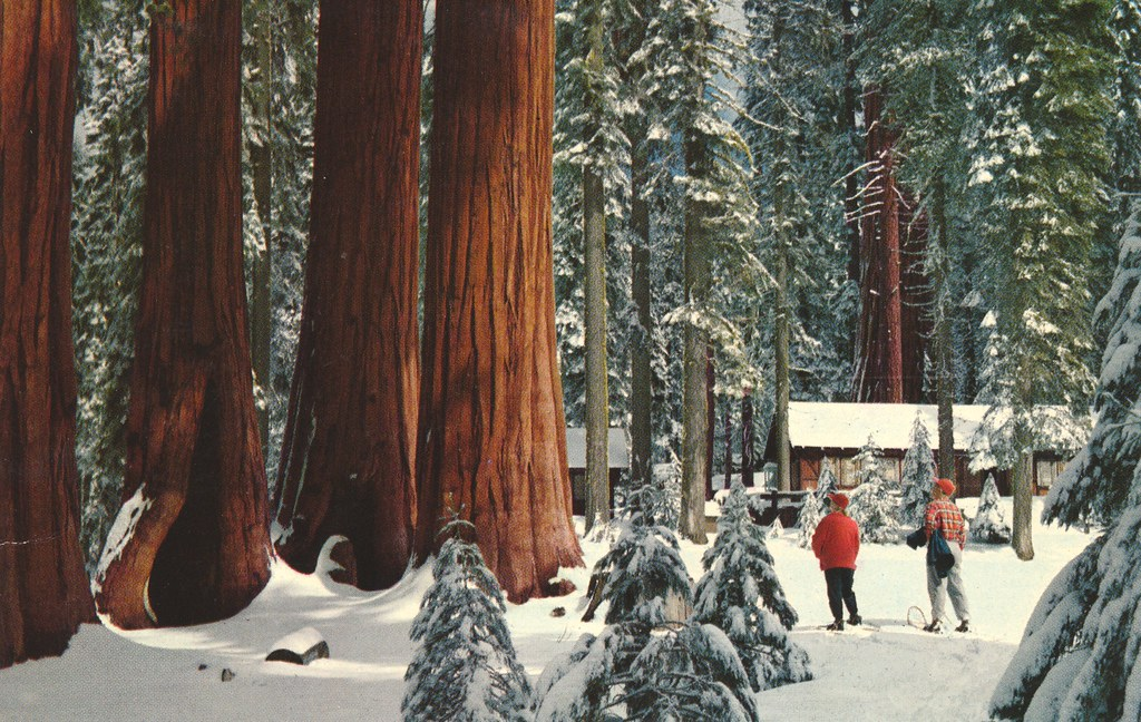 Winter Scene Sequoia National Park California