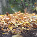 First fall leaves of 2016