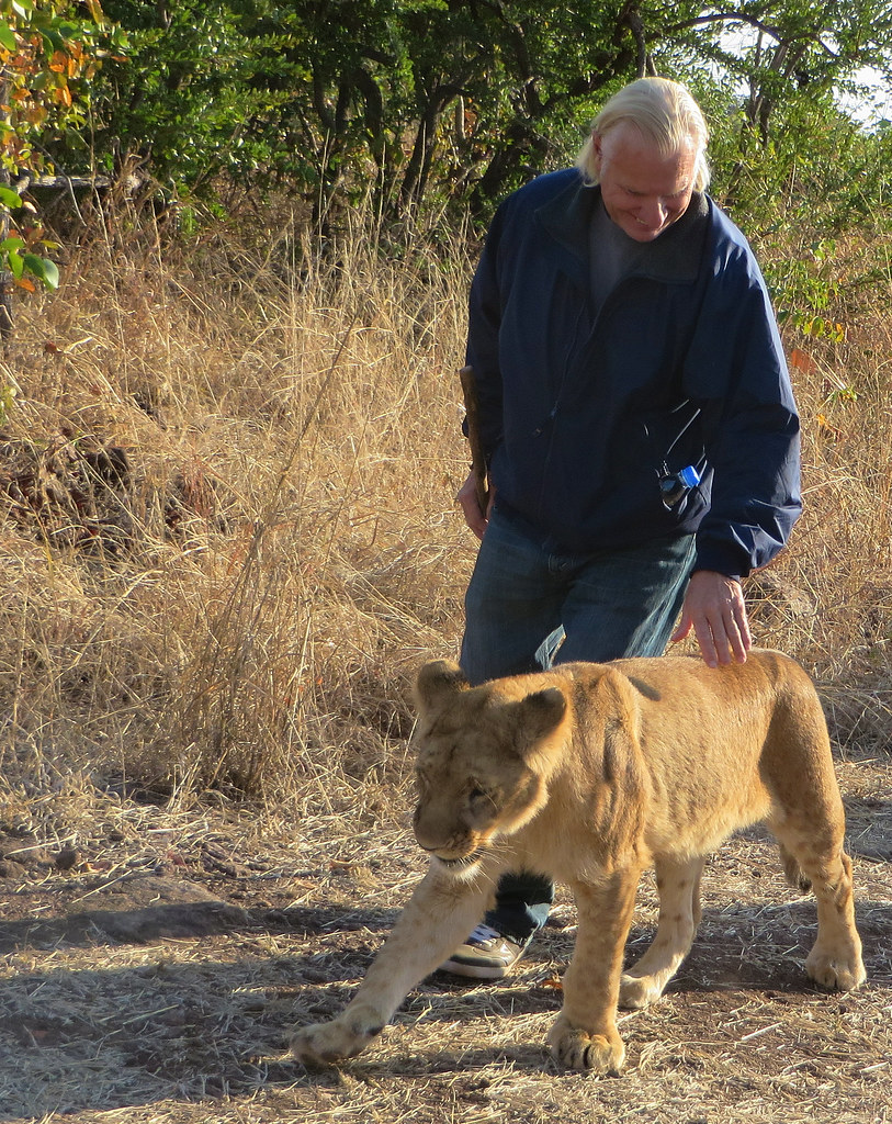Bill petting a lion cub during the walk