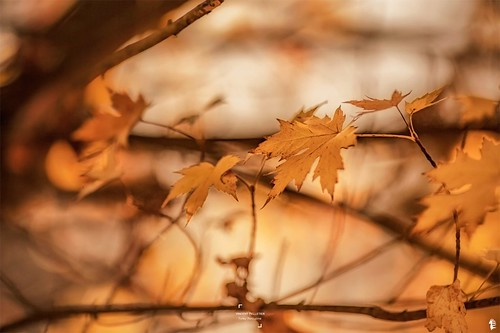 Autumnal mood with golden photos