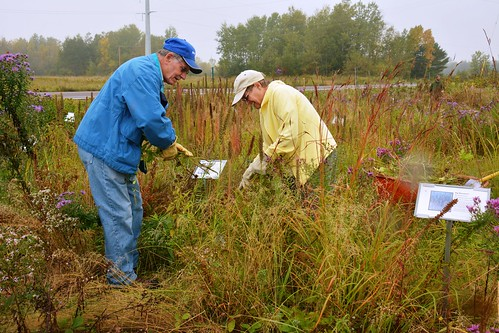 image: volunteers manage native plant display
