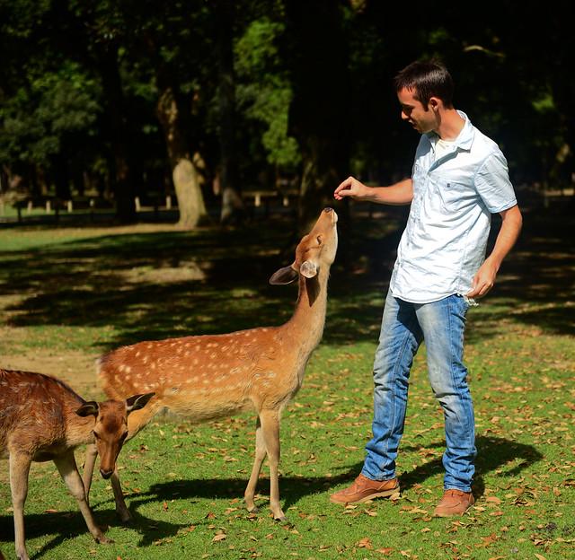 Dando de comer a los ciervos de Nara
