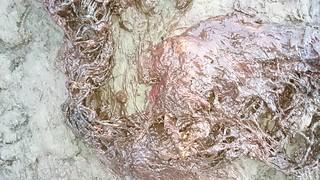 王建平認為抹香鯨胃裡的垃圾袋跟漁網也許不是直接致死的主因,不過垃圾袋跟漁網仍會造成牠攝食困難。