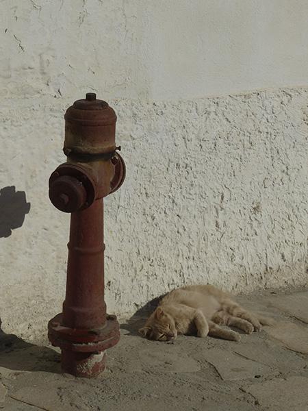 chat et bouche d'incendie