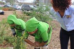 Bernice Curren students examine one of their narrow-leaved milkweed plants in their Schoolyard Habitat