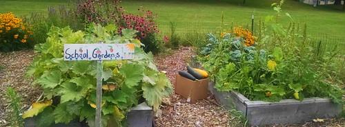 Andrew's school garden