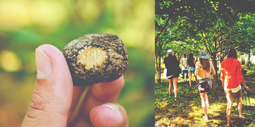 Truffle hunting in the Champagne-Ardenne, France | via It's Travel O'Clock
