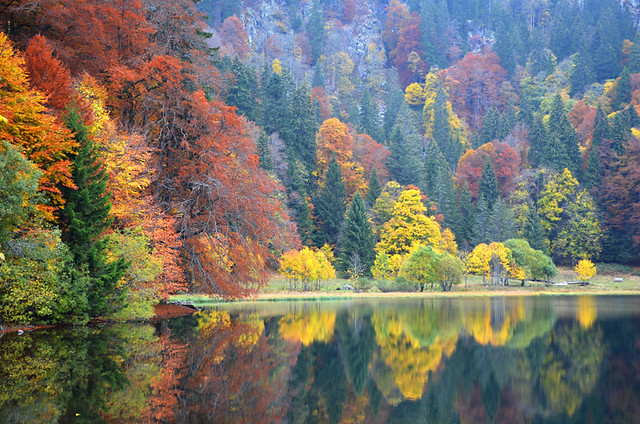 Autumn, Feldsee, Black Forest, Germany