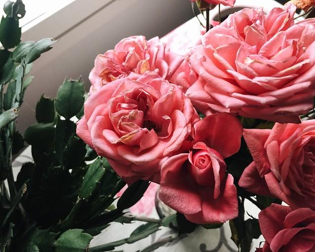 ruusut, roses, pinkit ruusut, vaaleanpunainen, light pink roses, weekend, viikonloppu, kukat, flowers,