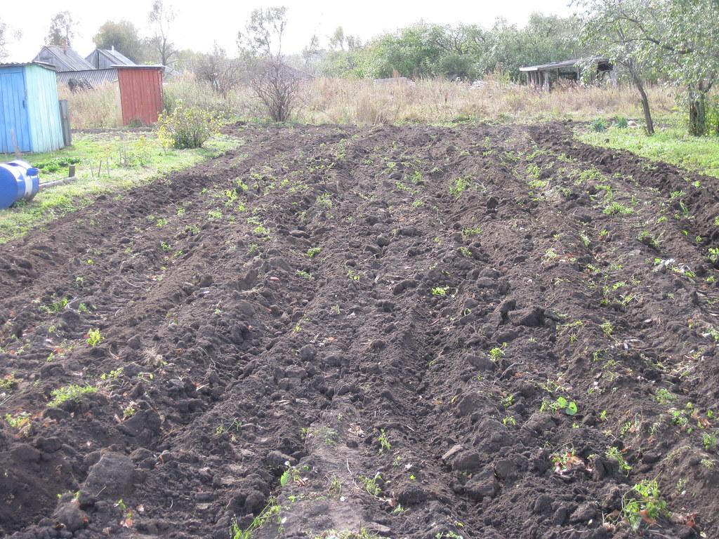 Вспаханный огород