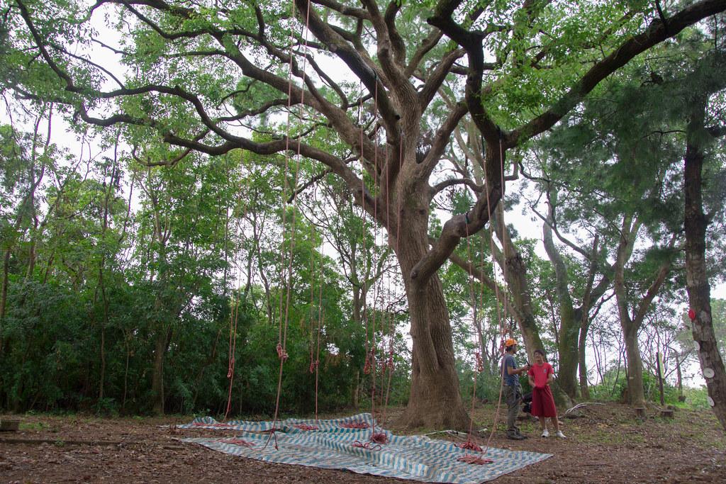 沙連墩攀樹體驗