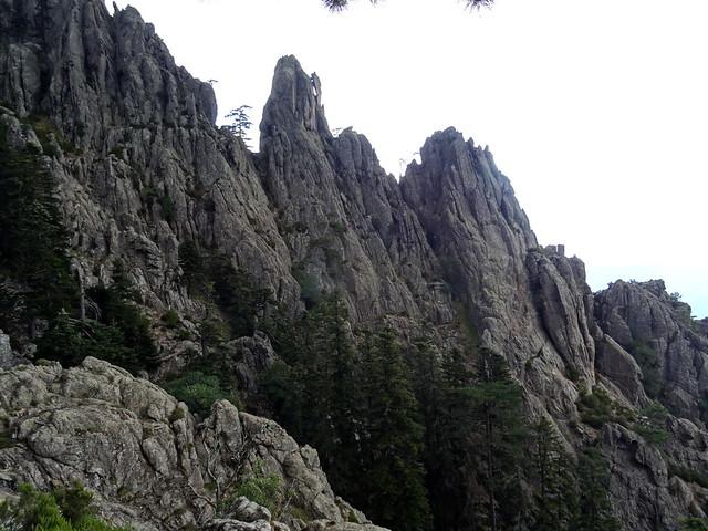 Versant Est de Bocca Samulaghja : les deux brèches dans l'arête Sud de Punta Buvona (la bonne est celle avec le grand pin)