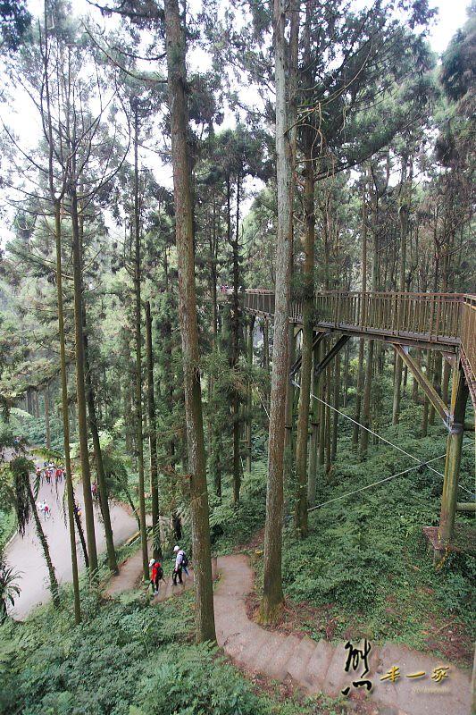 南投景點|溪頭自然教育園區|溪頭神木|天空走廊|大學池