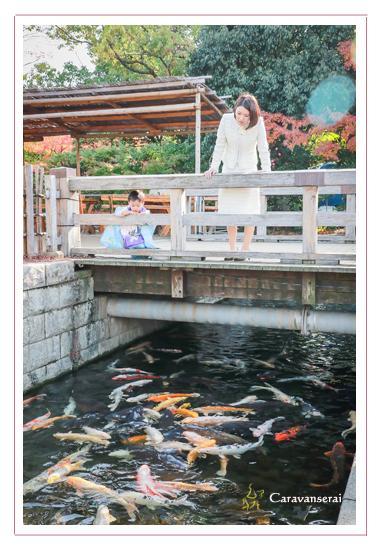 熱田神宮(名古屋市熱田区)と白鳥庭園で七五三写真の出張撮影 男の子 着物 和装 神社 ロケーション撮影 フォトスタジオ 写真館