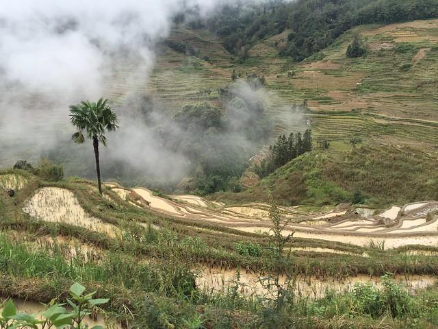 Terrazas de arroz de Yuanyang (Yunnan, China)