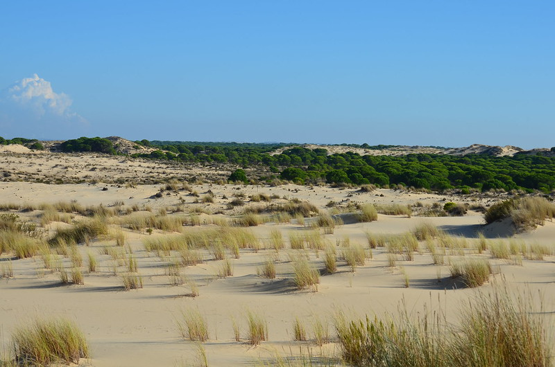 PN. Doñana, dunas, pinos y bichos 23441200485_6c079f0e92_c