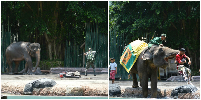 7. Elephant show collage