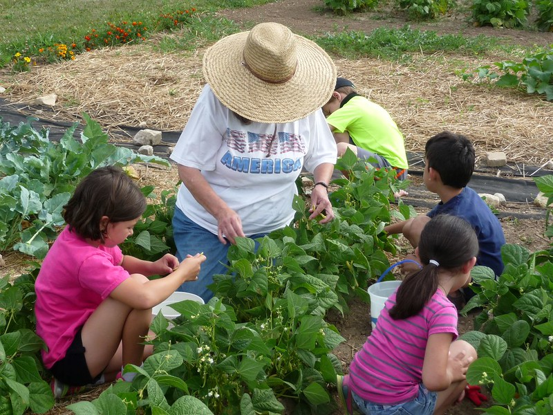 Image of volunteer gardening with youth