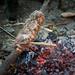 Cormarye Pork Loin Roasting on Greenwood Spit