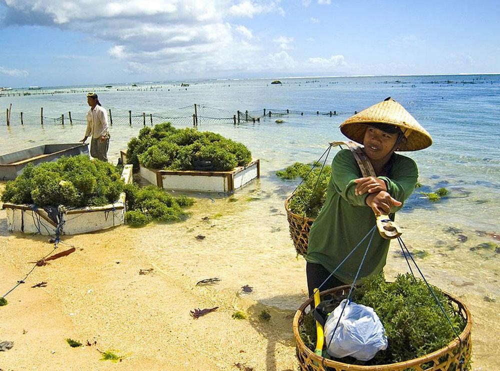 3-grandnikko-seaweed-farming-via-trekearth