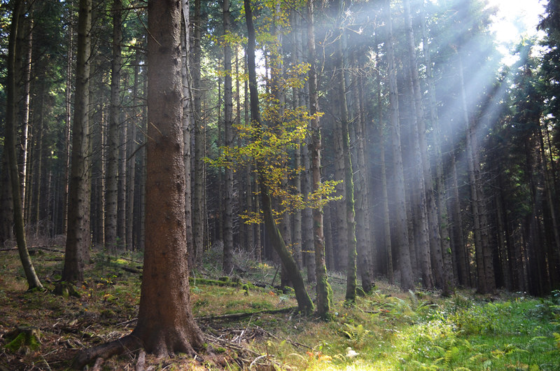 Sunlight in the Black Forest, Germany