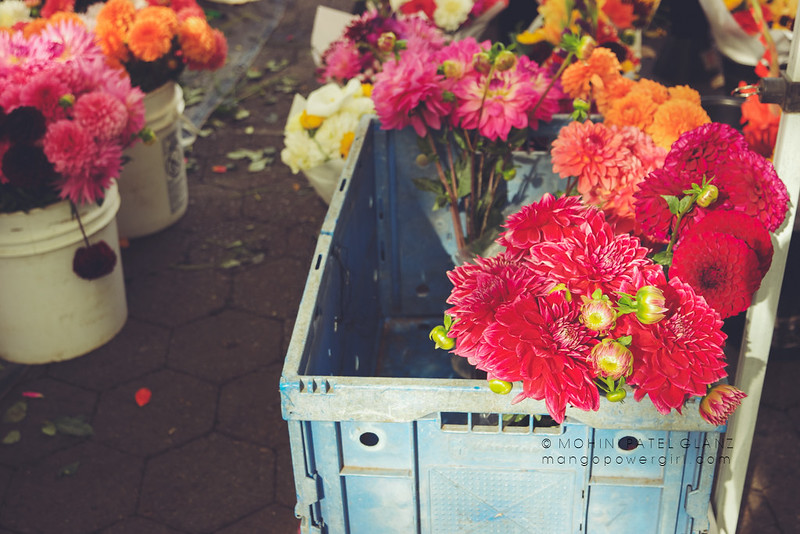 last of the dahlias at portland farmers market