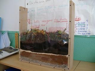 allevare lombrichi in un terrario