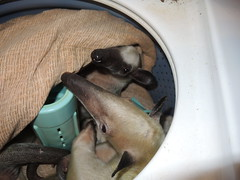 Snug in their washer