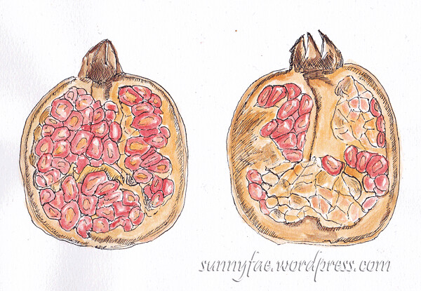pomegranate-drawing