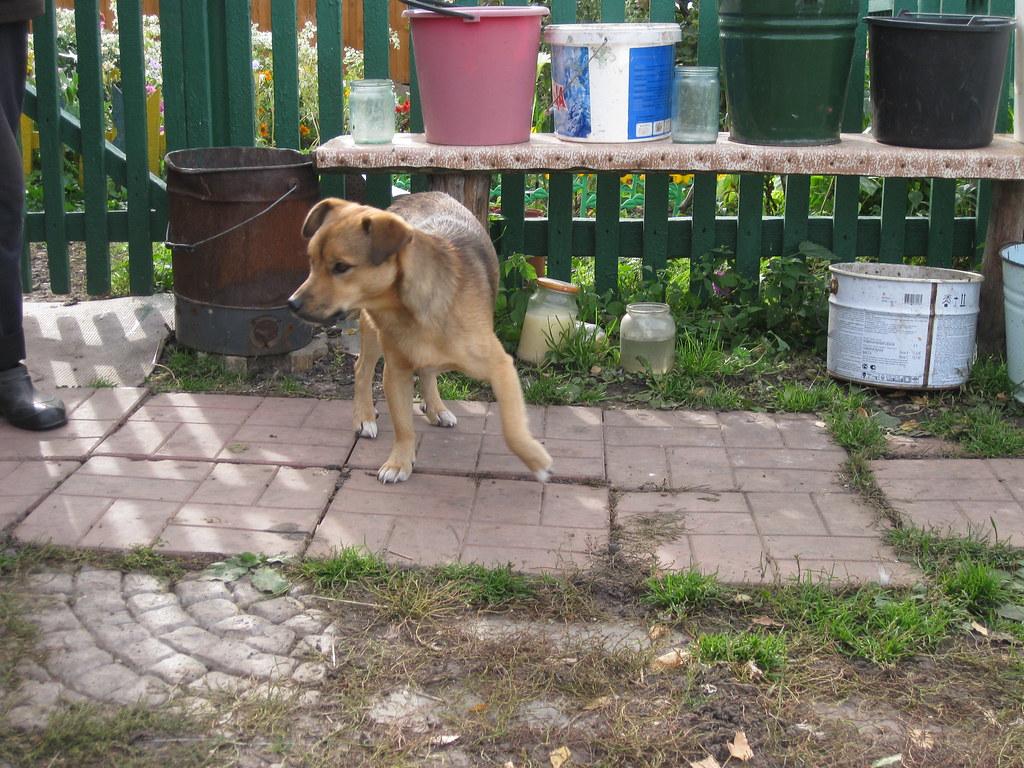 Собака Шарик