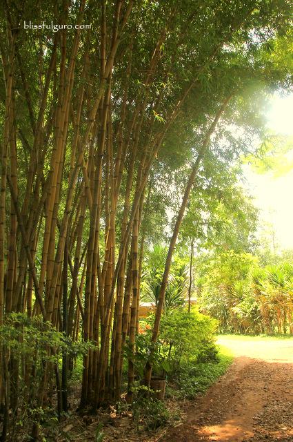 Tad Fane Waterfalls Bolaven Plateau Laos