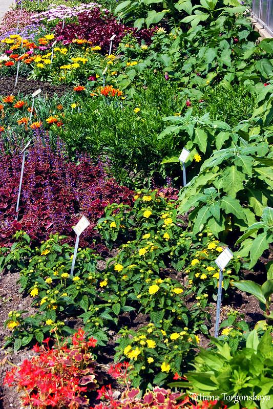 Клумба в мюнстерском ботаническом саду