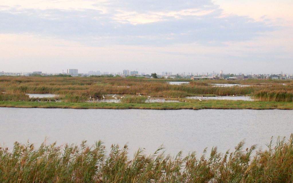 高雄市茄萣和永安濕地串聯起來的生態廊道,提供完整的生態系統服務功能。攝影:李育琴