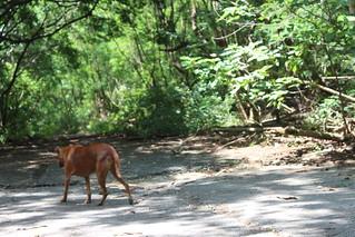 壽山國家自然公園內的浪犬,捕捉後何去何從,動保團體看法兩極。攝影:廖靜蕙