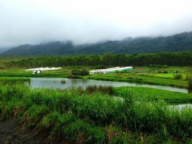里拔哈農場占地六公頃,濕地耕地交錯,水鳥陸鳥同歡。