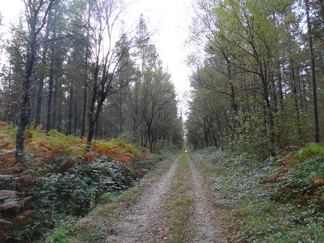 Camino en al Ruta das Bidueiras