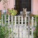 Cat climbing over a fence gate